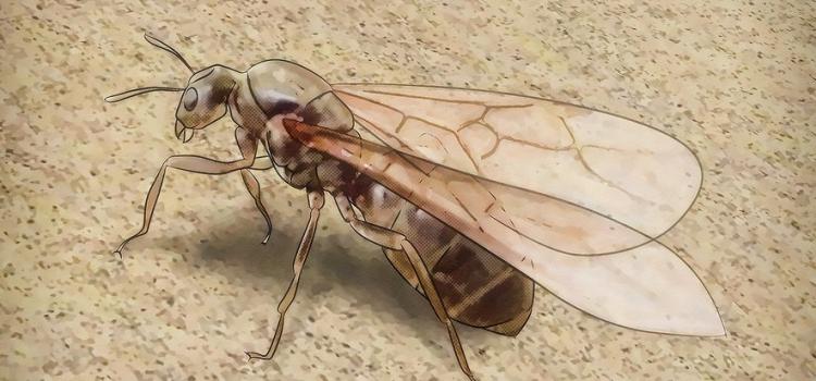 Votre jardin est envahi de fourmis ? Faites appel à un exterminateur au plus vite !