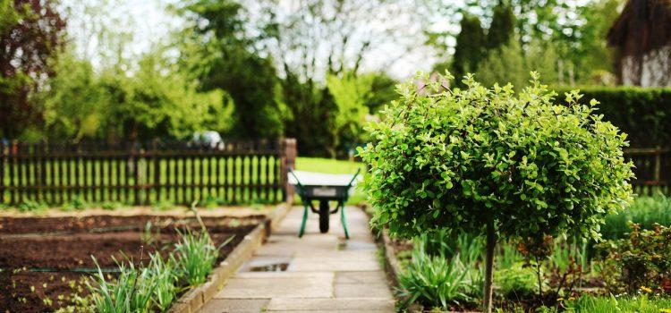5 astuces pour bien entretenir son jardin