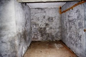 https://www.publicdomainpictures.net/fr/view-image.php?image=129372&picture=cave-abandonnee